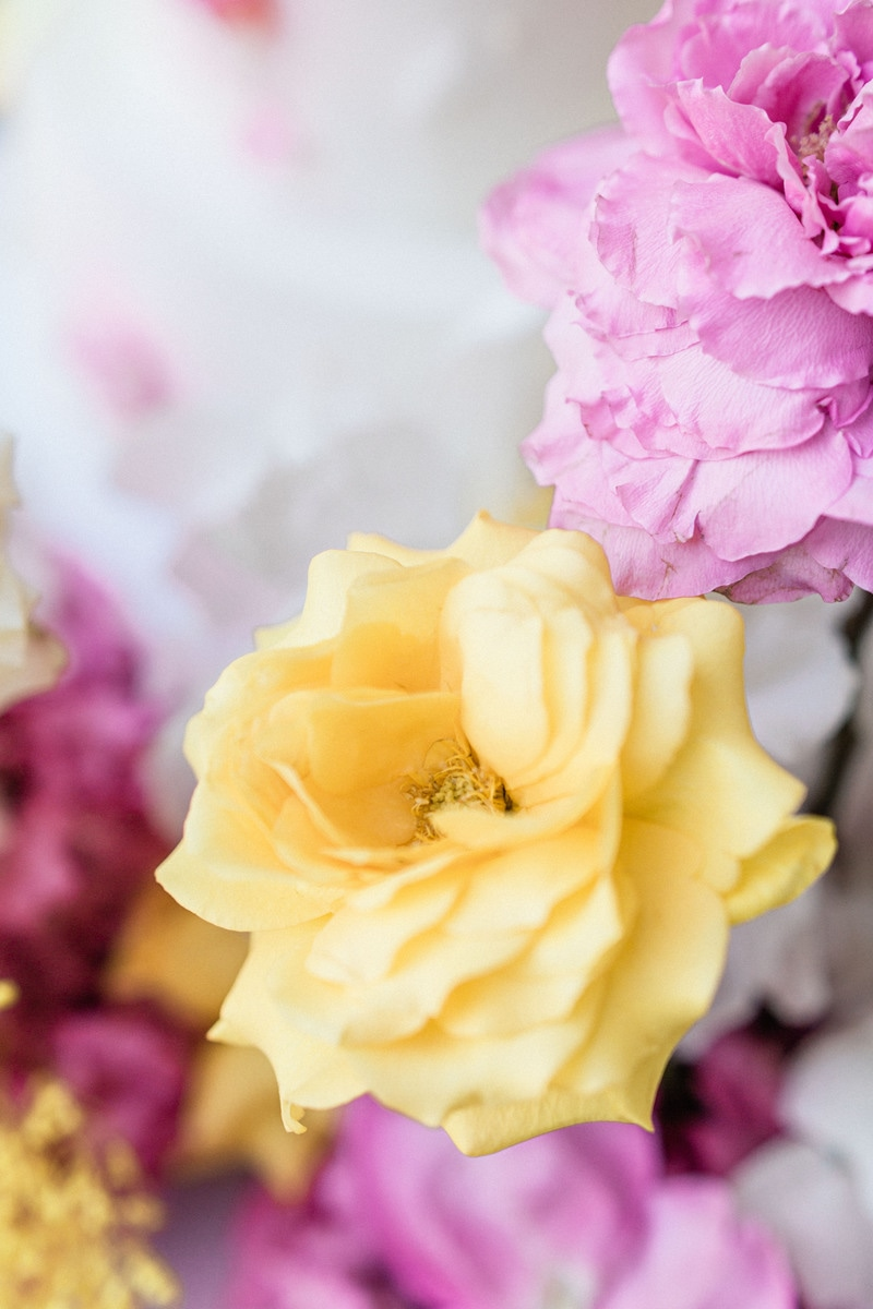 gros plan fleurs jaune